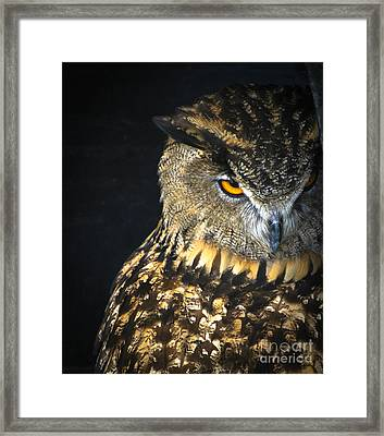 The Look Framed Print by Amy Porter