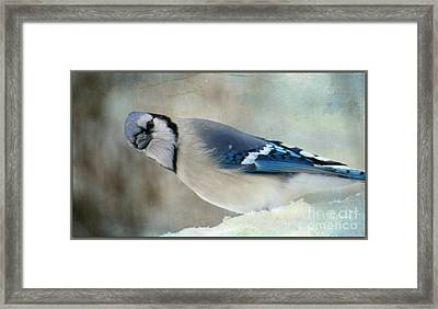 Framed Print featuring the photograph The Look by Brenda Bostic