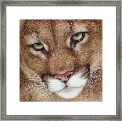 The Look Cougar Framed Print