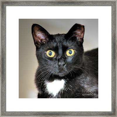 Framed Print featuring the photograph The Look by Erhan OZBIYIK