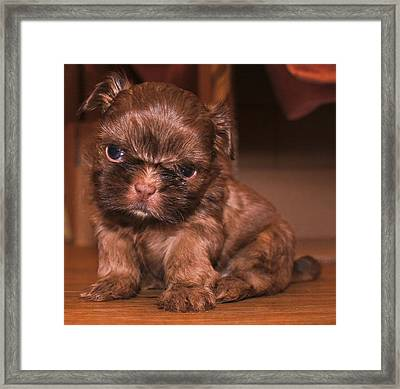 The Look Framed Print by John Fitzpatrick