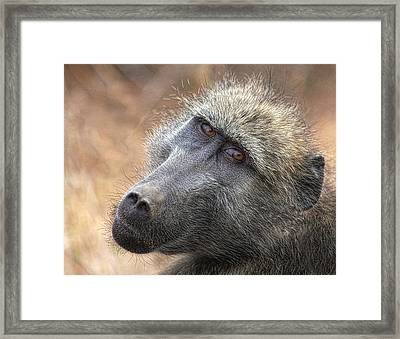 Framed Print featuring the photograph The Look by Kim Andelkovic