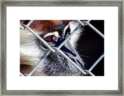 Framed Print featuring the photograph The Look Of Despair by Jason Politte