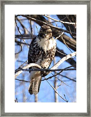 The Look Says It All Framed Print by Thomas Young