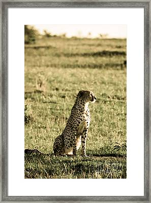 The Look That Kills Framed Print by Syed Aqueel