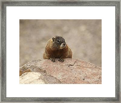 The Lookout Framed Print by Bob Dowling