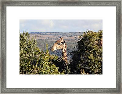 The Lookout Framed Print by Chris Whittle