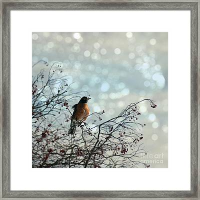 The Lookout Framed Print by Diane Miller
