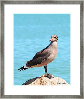 Framed Print featuring the photograph The Lookout by Dick Botkin