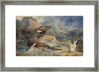 The Lost Hind Framed Print by Archibald Thorburn