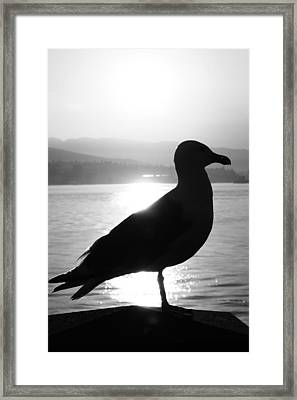 The Lost Letter Framed Print by Empty Wall