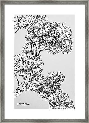 The Lotus Flower Framed Print
