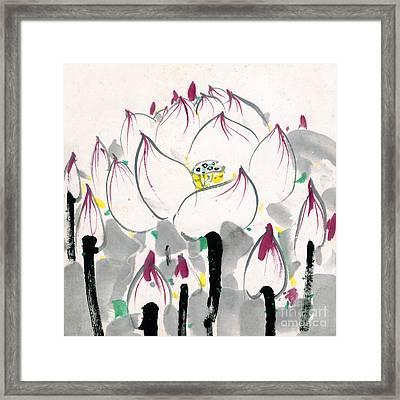 The Lotus In Full Bloom Framed Print
