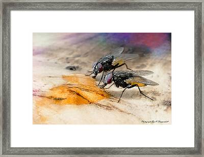 The Love Of Honey 01 Framed Print by Kevin Chippindall