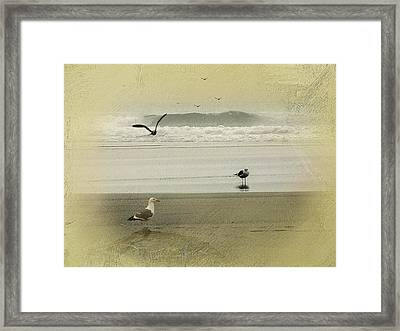 The Love Triangle Framed Print by Diane Schuster