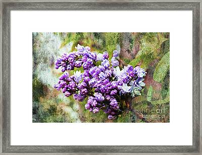 The Lovely Lilac Framed Print by Andee Design