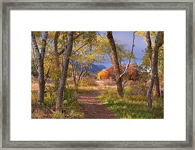 The Lure Of The Lonely Pathway Framed Print by Tim Reaves