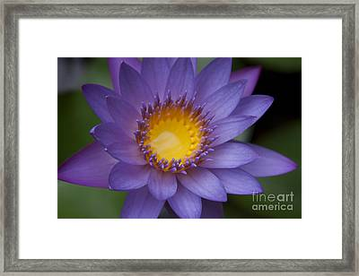 The Luxury Of Things Framed Print by Sharon Mau