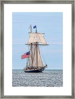 The Lynx Framed Print