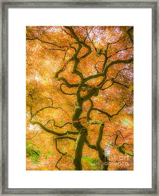 The Magic Forest-15 Framed Print
