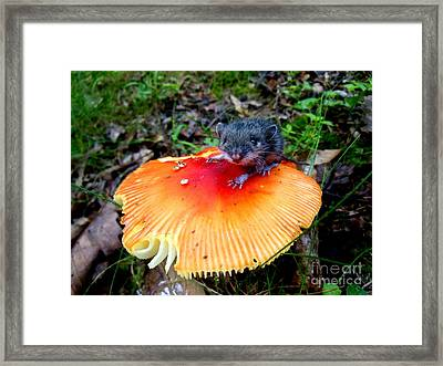 The Magic Mouse Framed Print by Sharon Costa