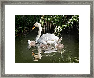 The Magic Of Spring Framed Print by Gill Billington