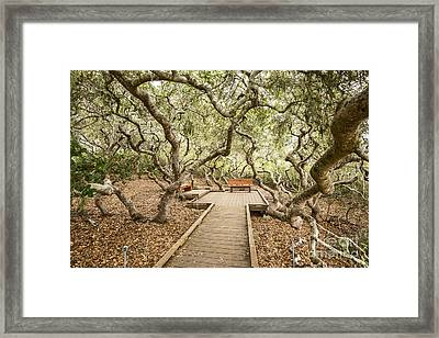 The Magical El Moro Elfin Forest. Framed Print by Jamie Pham