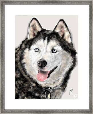 The Magnificent Husky Framed Print