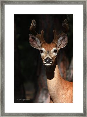 Framed Print featuring the photograph The Magnificent One  by Rita Kay Adams