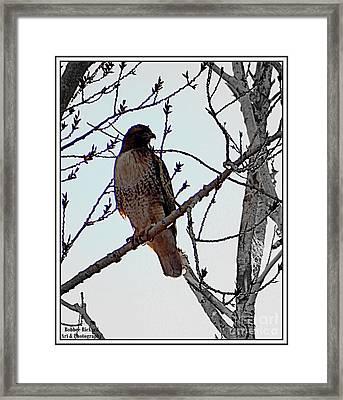 The Majestic Hawk Framed Print by Bobbee Rickard