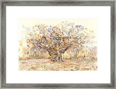 The Major Oak Of Sherwood Forest Framed Print by David Evans