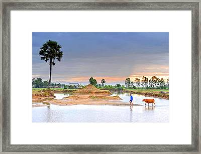 The Man And His Cow Framed Print by Dung Ma