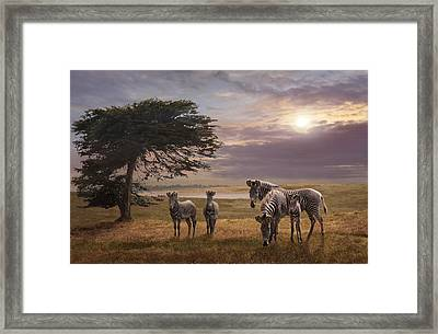 The Mane Event Framed Print