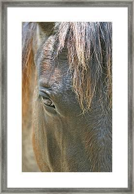 The Mane Eye Framed Print by Bruce Gourley