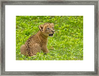 The Markings Of Youth Framed Print