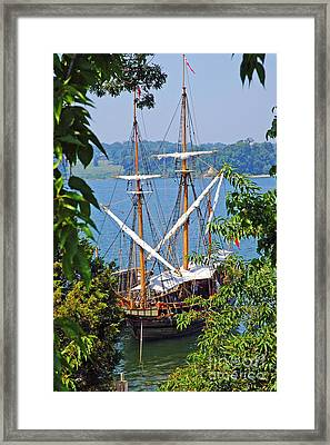 The Maryland Dove Framed Print