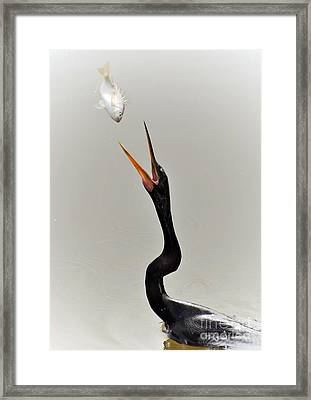 The Master Fisher Framed Print by Kathy Baccari