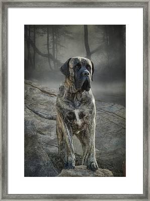 The Mastiff Framed Print by Fran J Scott
