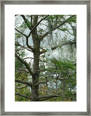 The Mating Dance Framed Print