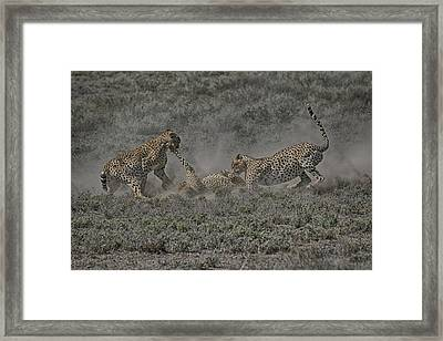 Framed Print featuring the photograph The Mating Game 2 by Gary Hall