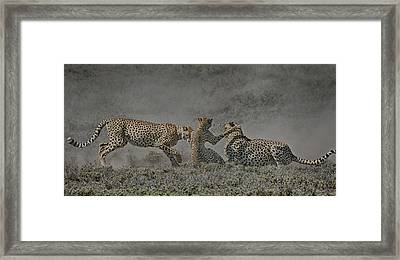 Framed Print featuring the photograph The Mating Game by Gary Hall