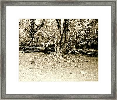 The Matriarch Framed Print by Scott Pellegrin