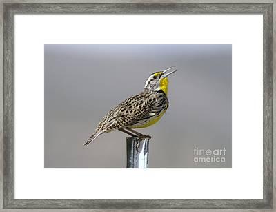 The Meadowlark Sings  Framed Print by Jeff Swan