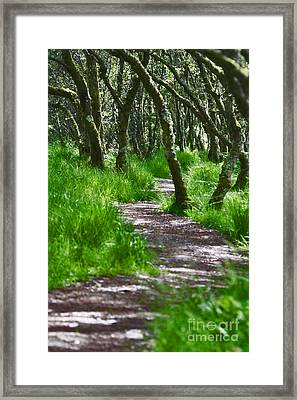 The Meandering Path Framed Print by Lynne Sutherland