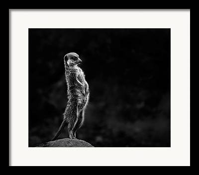 Observer Photographs Framed Prints