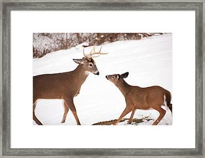 The Meet Framed Print by Karol Livote