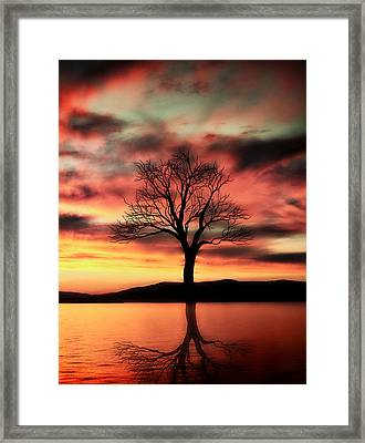 The Memory Tree Framed Print by Ally  White