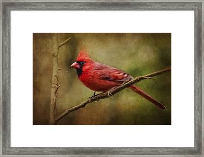 The Messenger... Framed Print