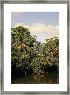 The Mighty Jungle Framed Print by Laurie Search