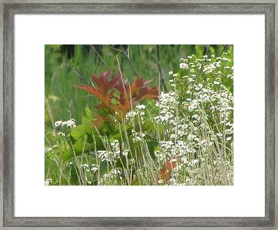 The Mighty Tiny Oak Amidst White Flowers Framed Print by Debbie Nester